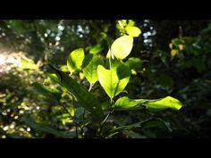 ▶ Viaje por el bosque de lluvias - YouTube