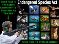 """DON'T LET RAND PAUL ENDANGER THE ENDANGERED SPECIES ACT! Rand's bill is so extreme it's being referred to as the """"Extinction Acceleration Act."""" Please Sign and Share VIRALLY In OUTRAGE!"""