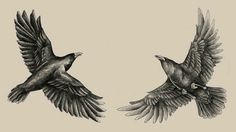 Ravens, Odin, Huginn and Muninn.