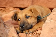 Chico the crag dog