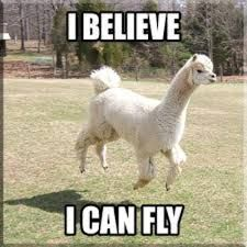 Image result for alpacas funny