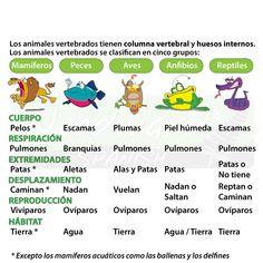 Ciencias 1º ESO: LOS VERTEBRADOS: CARACTERISTICAS