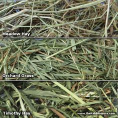 Meadow, Orchard and Timothy Hay - Best hay for your bunny explained