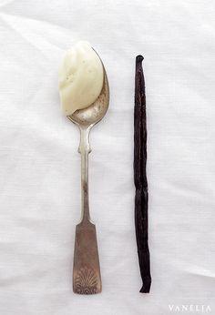 vanilla body cream with shea butter coconut oil & vanilla infused almond oil