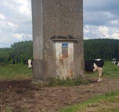 Lange koe