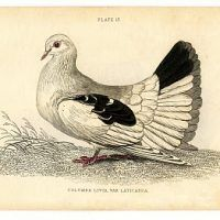 21 ideas for framed bird pictures graphics fairy History Clipart, Bird Shoulder Tattoos, Dove Pigeon, Bird Silhouette, Graphics Fairy, Bird Illustration, Illustrations, Bird Pictures, Nature Prints