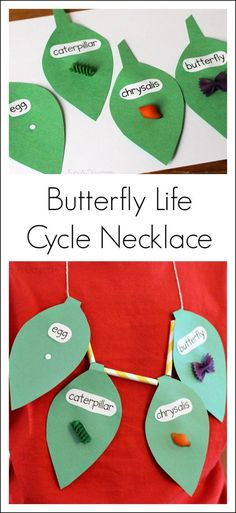 Butterfly Life Cycle Craft Necklace.  Need a new activity to go with your butterfly life cycle unit?  Try making this cute necklace using pasta.  Great for students with autism and special learning needs.  Get all the directions at:  http://fun-a-day.com/butterfly-life-cycle-craft-necklace/