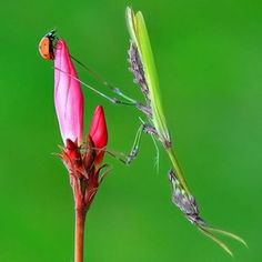 insects - Red & Pink