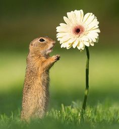 Cute Squirrel Pictures of Adorable Creatures Smelling Flowers Passion Photography, Types Of Photography, Animals And Pets, Funny Animals, Cute Animals, Wildlife Photography, Animal Photography, Vida Animal, Squirrel Pictures