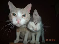 help feed 65 Egyptian cats, in addition to strays   Pet Expenses - YouCaring