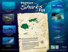 Shark Conservation in Fiji