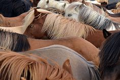 Blir hester som står sammen i luftegården mer skadet enn dem som går alene? Bør man blande hopper og vallaker, gamle og unge i samme flokk? Resultatet av fire års forskning gir klare anbefalinger til hesteeiere.