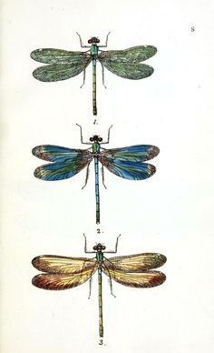LOVE these Dragonflies!  They look like they are doing some kind of zen yoga.