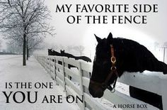 My favorite side of the fence Equine Quotes, Equestrian Quotes, Horse Quotes, Horse Sayings, Equestrian Style, Most Beautiful Animals, Beautiful Horses, Horse Girl, Horse Love