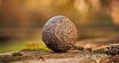 Moqui Marbles – Ein zartes Wunder der Natur