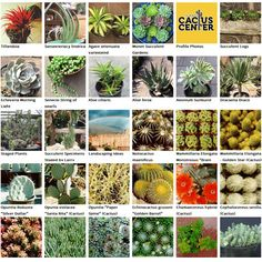 California Cactus Center Is Southen S Premiere Specialty Nursery Featuring And Succulent From The Around World
