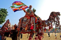 Pushkar Camel Festival in India