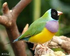 Little birds with Beautiful color - Recherche Google