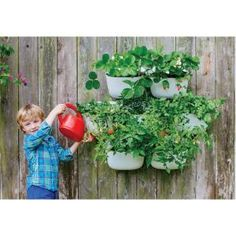 Woolly Pocket, Living Wall Planter 2 White Recycled Plastic Self Watering Vertical Gardening System (4-Pack), NLWP4W at The Home Depot - Mobile