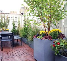 Roof Garden Plants Popular With Roof Garden Plants. Roof Garden Plants Best Picture With Roof Garden Plants. Roof Garden Plants Art Galleries In With Roof Garden Plants. - Best Home Decoration Tips Large Backyard Landscaping, Backyard Garden Landscape, Backyard Vegetable Gardens, Small Backyard Gardens, Modern Backyard, Garden Pond, Backyard Ideas, Garden Kids, Rustic Backyard