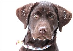 snow dog.  #dogs #winter #adorable