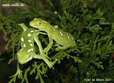 Related image Geckos, Reptiles, Pictures, Animals, Image, Photos, Animales, Animaux, Photo Illustration