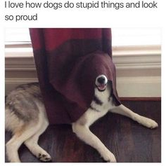 Look So Proud | Funny Pictures, Quotes, Memes, Jokes