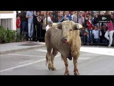 Bull Fighting Festival #4 Best Funny Videos Bull fighting, Funny Videos Compilation Funny Videos Try Not to Laugh Bull Fighting Festival #4 Best Funny Videos  Watch the video «Bull Fighting with People Funny...