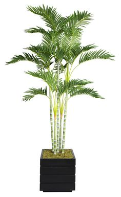 Features:  -No need to shop for a planter separately - comes complete with decorative planter.  -Artificial plants let you decorate without concern for water damage, trimming or soil.  -Palm tree.  Pr