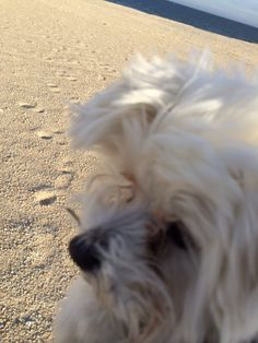 Dolce's selfie at the beach :)