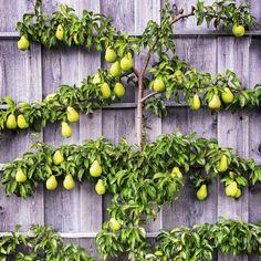 Fruitboom in een kleine tuin