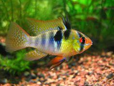 Selecting Community Fish For Your Aquarium, Aqua Eden Articles