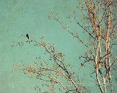 Fine Art Photograph, One Bird in a Winter Tree, Haiku Art, Teal Tones, Winter Scene, Golden Light, Wall Decor, 8x10 Print