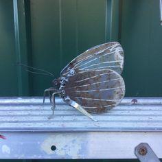3 Holly Blue Butterfly  Scrap Metal Sculpture Unique