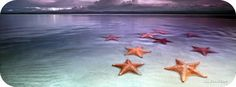 Vesi pilvet meritähti- Kuva on We Heart It Timeline Cover Photos, Cover Pics, Cover Art, Best Facebook Cover Photos, Facebook Timeline Covers, Twitter Cover Photo, Fb Covers, Under The Sea, Starfish