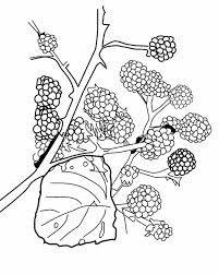coloriage de fleurs de savoie - Recherche Google