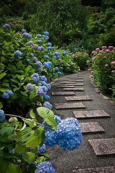 hydrangea garden, yoshimine temple of kyoto, japan