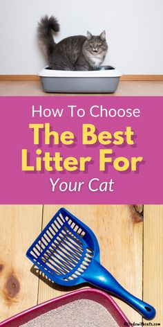 Finding what is the best cat litter for you and your cat is essential. Whether your feline frend goes outside or not, litter is a necessity. Discover how to choose the best litter for your cat, including pros and cons. #catlitter #bestcatlitter #bestlitter #bestlitterforcats Tidy Cat Litter, Cleaning Litter Box, Best Cat Litter, Tidy Cats, Cat Tracker, Cat Haircut, Garfield Cat, Cat Care Tips