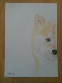Wolf/fox/dog/I don't know;  drawing