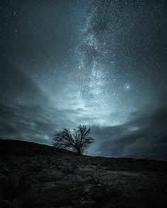 Galactic Tree. Photos of starry Finnish nights by Oscar Keserci Photography on bored panda
