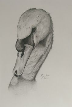 This is a small signed graphite swan study I did as practice before a larger oils piece. On A4 paper. No prints have been made.