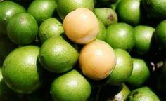 6 beneficios de la quenepa o Beneficios del huaya