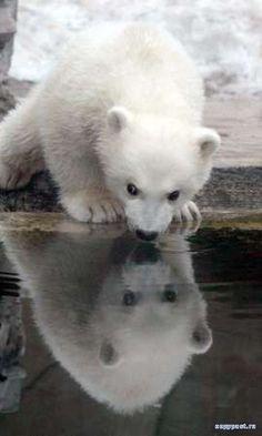 Photos rigolotes de vos animaux !  Forum Chiens  Wamiz