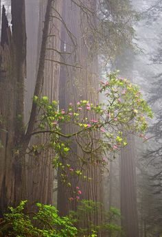 Redwood National Park, California, USA