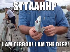 The annoyed shark : The tiniest, most adorable angry of the deep blue ocean. Lets find this guy a good sharknado.