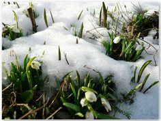 Livet på Stenstugu » 2009 » februari