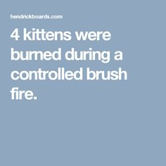 4 kittens were burned during a controlled brush fire.