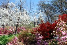 Woodward Park Tulsa Ok.  Oh yeah!  Spring in Tulsa is beautiful.