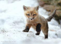This one is brand new to this world... 365 days fox marathon Day 154 #365daysfoxmarathon #photography #cute