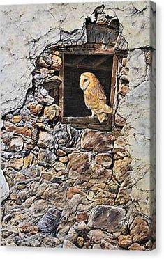 A New Home Barn Owl Canvas Print by Alan M Hunt Wildlife Paintings, Wildlife Art, Bird Paintings, Painting Prints, Art Prints, Acrylic Painting Inspiration, Owl Canvas, British Wildlife, Photorealism